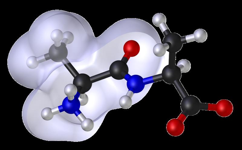 alanine peptide model